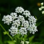 blossom-plant-flower-herb-produce-botany-615338-pxhere.com